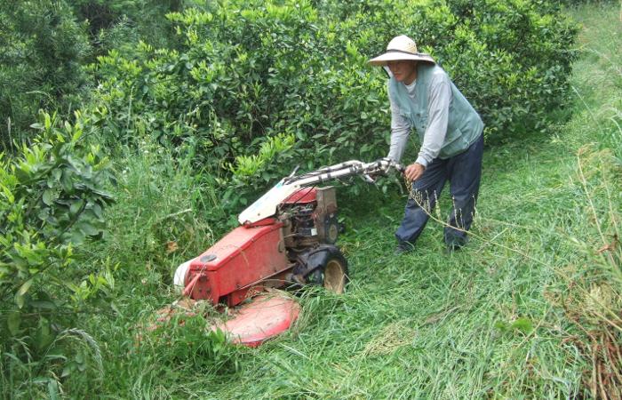 有機でこぽん04 草倒し農法