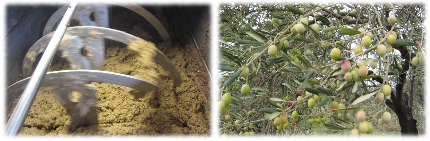 オリーブと果実を同時圧搾