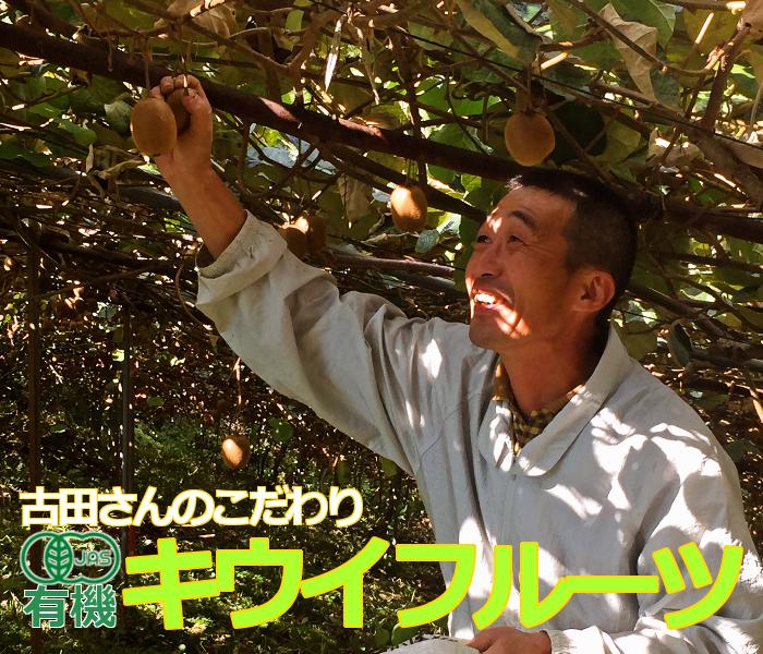 古田さんの有機キウイフルーツ
