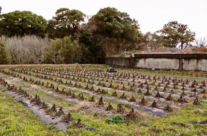 たまな農園