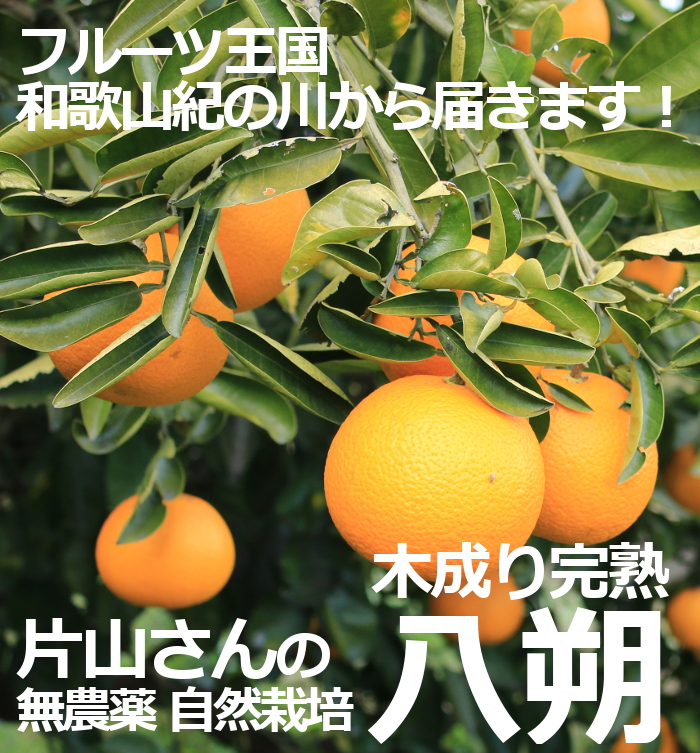 片山さんの無農薬木成り完熟八朔