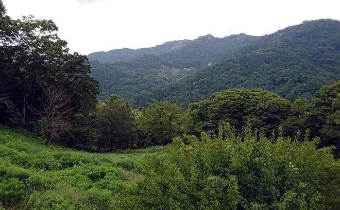 池田町陸郷桜仙峡